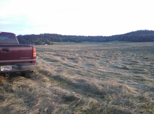 Dad's Truck, Newly Mown Hay